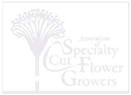 Pollinate Flowers is a member of Association of Specialty Cut Flower Growers
