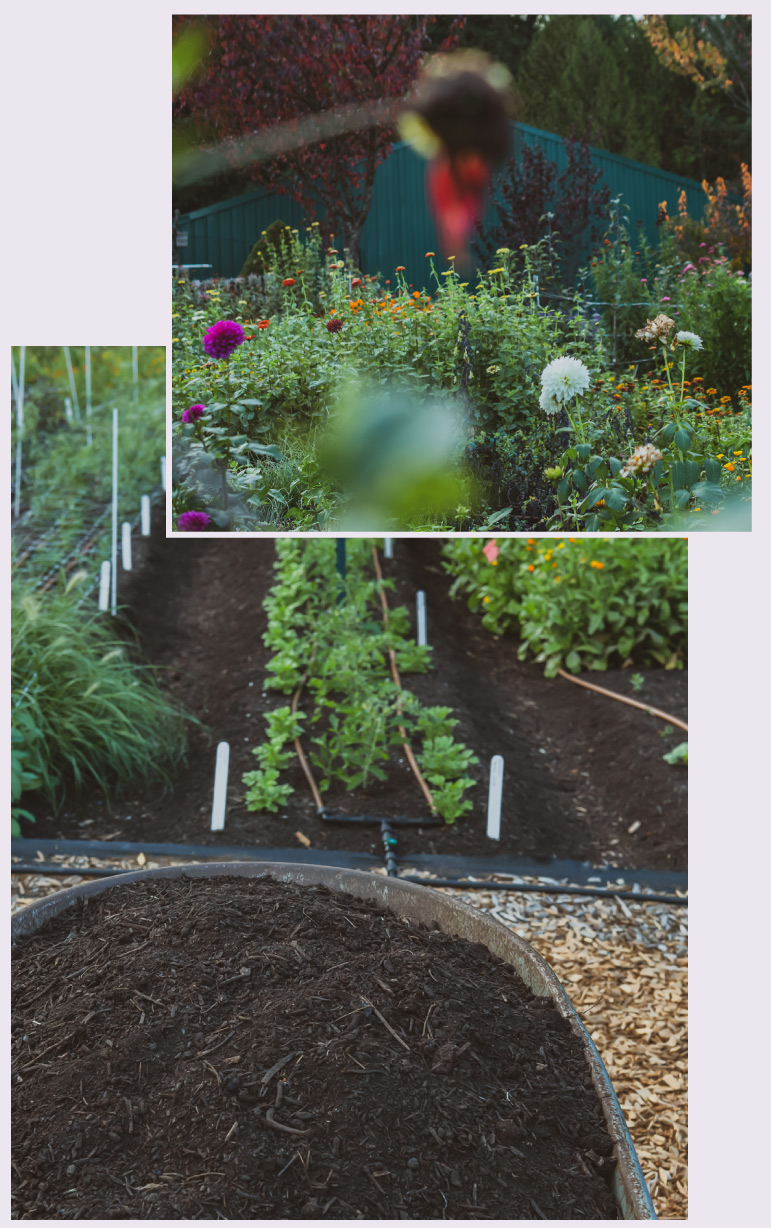 The Pollinate Flowers Production Garden
