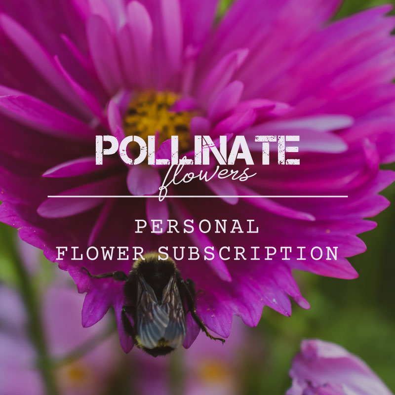 Weekly Personal Flower Subscriptions from Pollinate Flowers